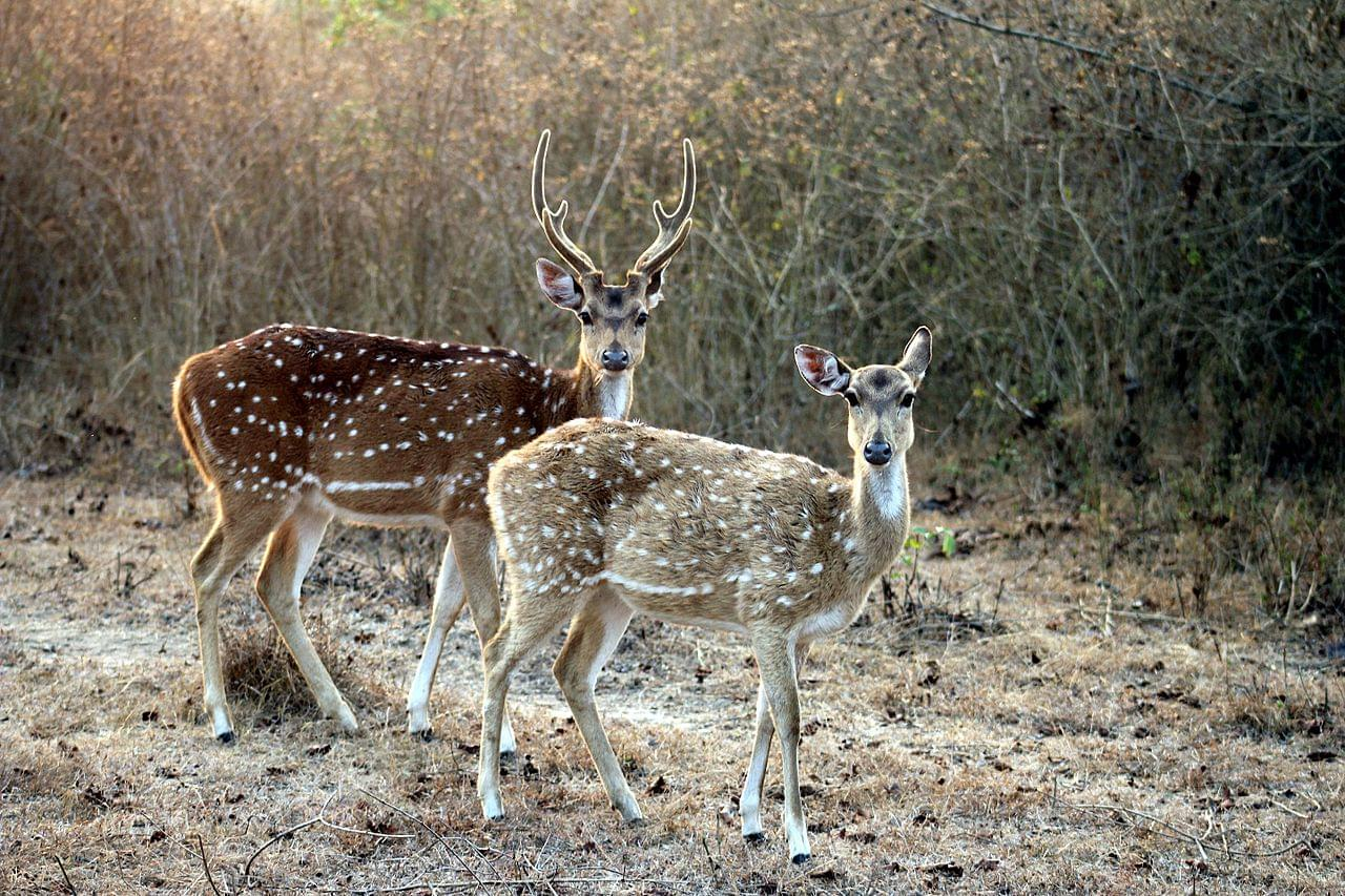 4-Night-5-Days-Mysore-and-Bandipur-National-Park-Tour-Package-JustWravel-1597395349-3.jpg
