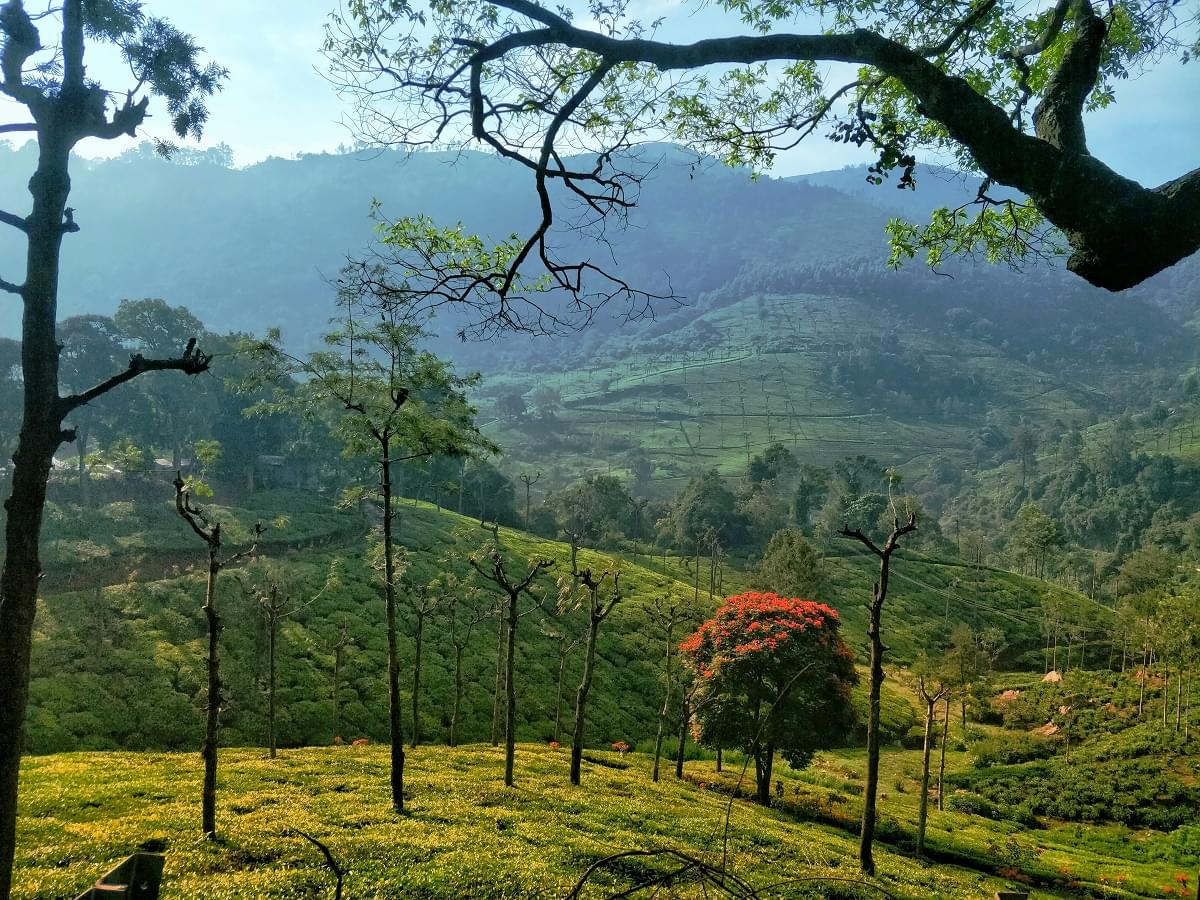 5_Night_6_Days_Coorg_and_Ooty_Tour_Package_(4)-1-JustWravel.jpg