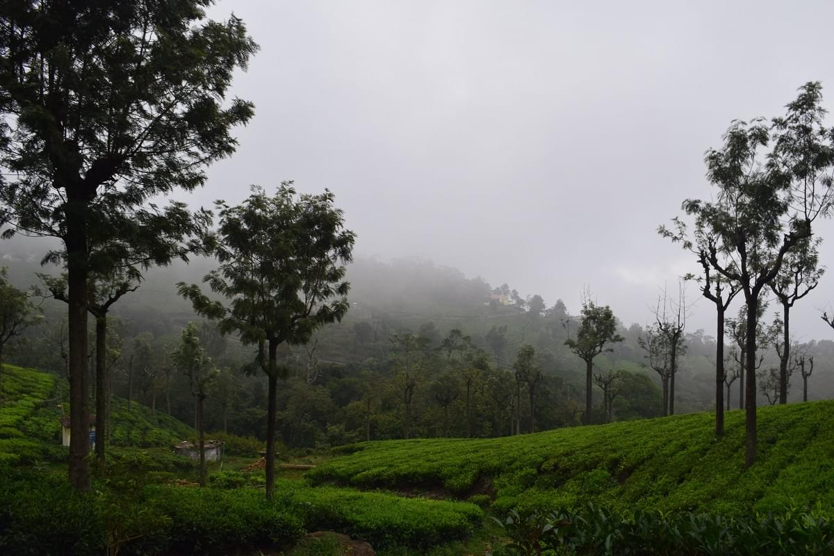 6-Night-7-Days-Coorg,-Ooty,-Mysore-and-Coonoor-Tour-Package-JustWravel-1597395212-2.jpg