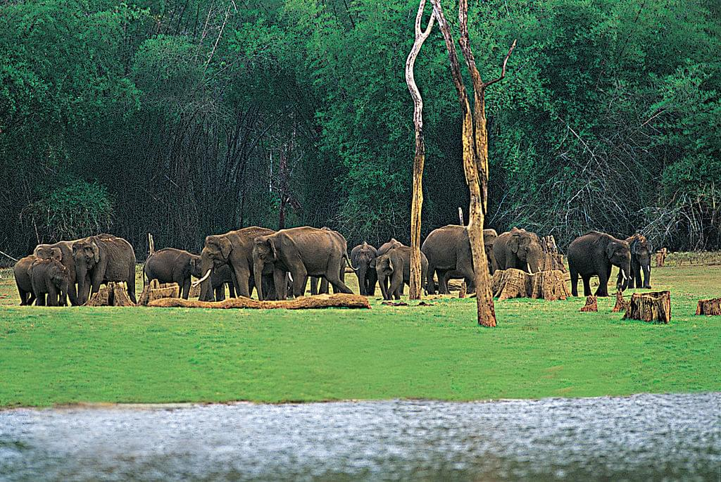 6-Night-7-Days-Tour-Package-of-Kerala-with-Varkala-JustWravel-1597392408-3.jpg