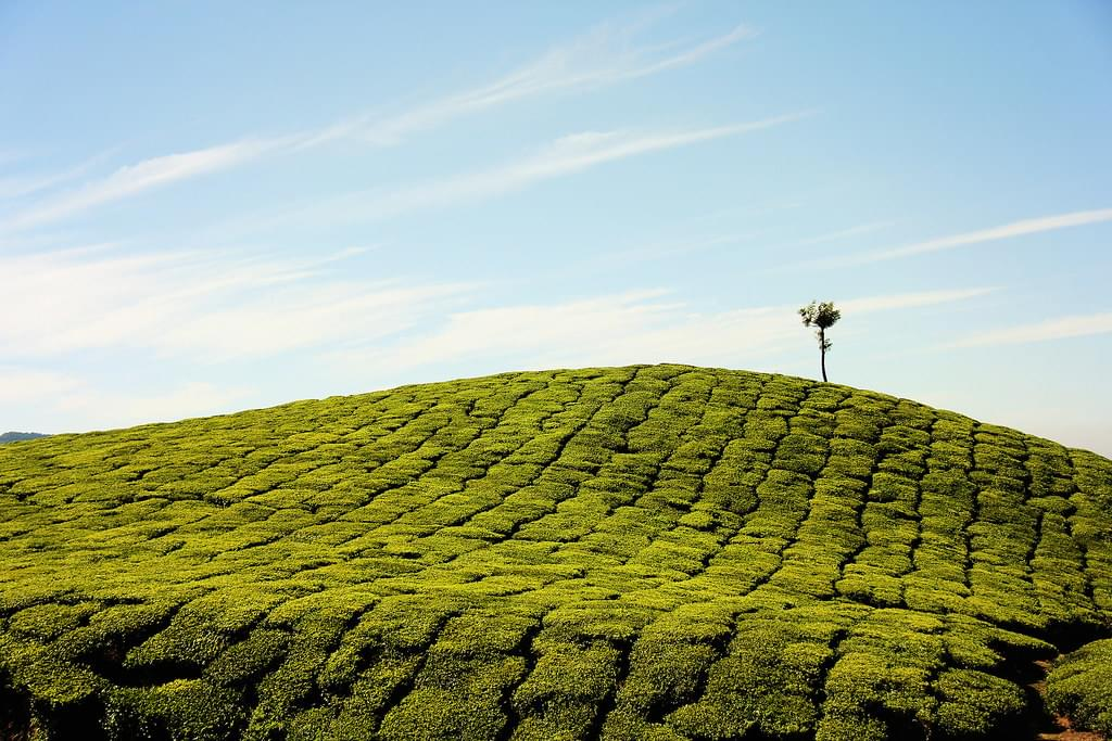6-Night-7-Days-Tour-package-of-Kerala-with-Vagamon-JustWravel-1597392389-2.jpg