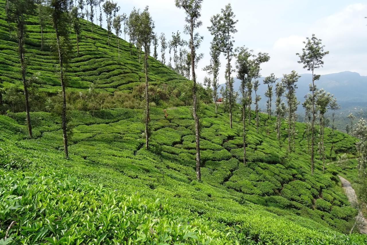 6-Nights-7-Days-Chikmagalur,-Coorg-and-Mysore-Tour-Package-JustWravel-1597395239-2.jpg
