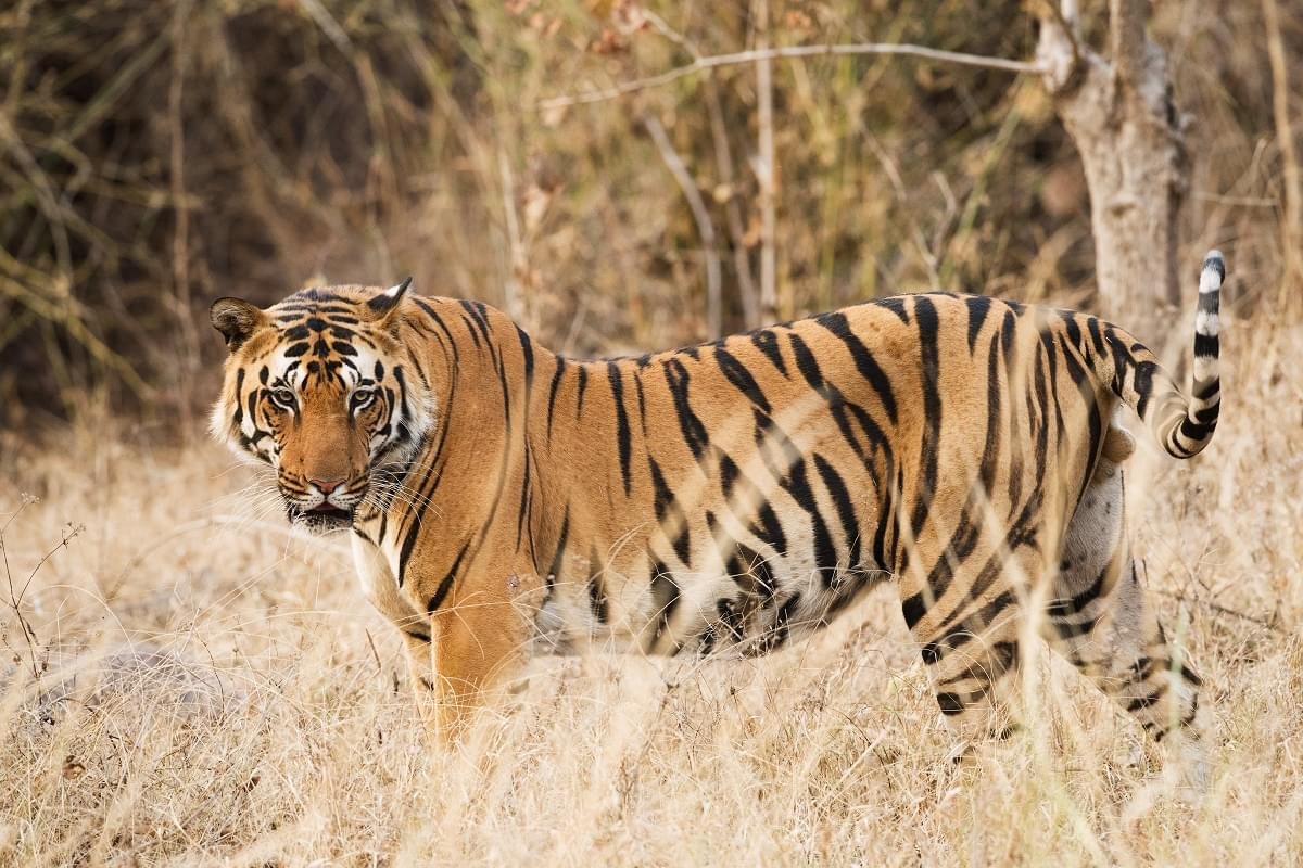 7-Night-8-Days-MP-Tour-Package-with-Bhedaghat,-Kanha-and-Bandhavgarh-National-Park-JustWravel-1597394667-3.jpg