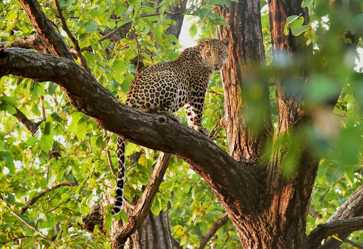 7-Night-8-Days-MP-Tour-Package-with-Bhedaghat,-Kanha-and-Bandhavgarh-National-Park-JustWravel-1597394667-5.jpg