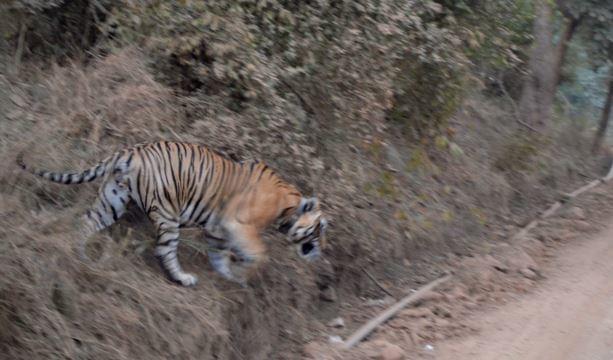 Adventurous-Tour-Package-of-Sariska-Tiger-Reserve-Park-JustWravel-1597391338-3.jpg