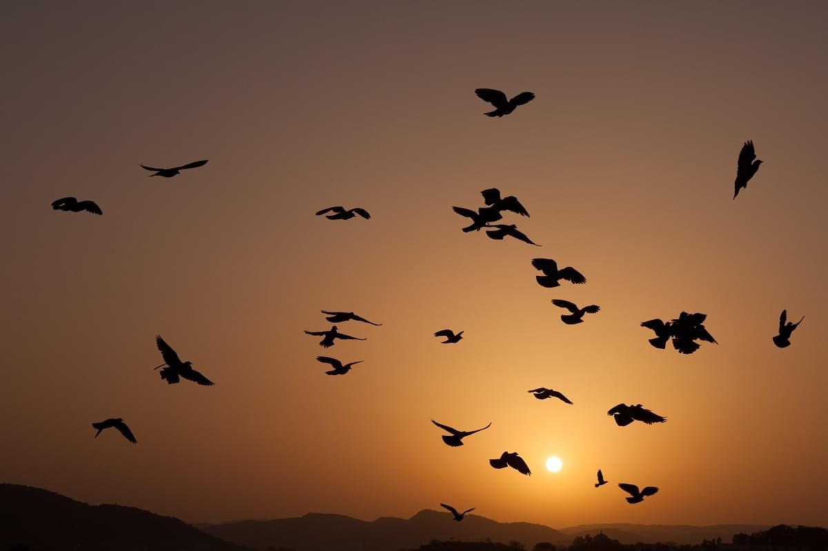 Beautiful Sunset View at Lake Pichola