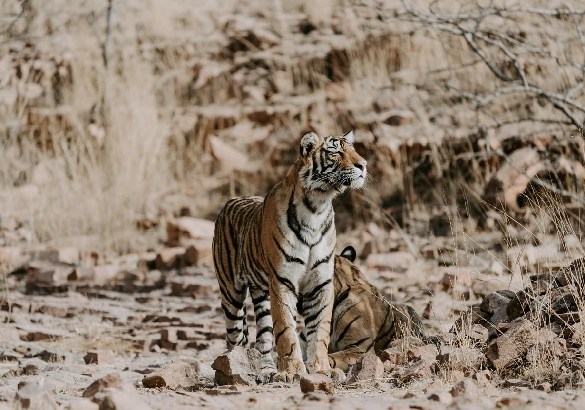 Golden-Triangle-Tour-Package-with-Ranthambore-National-Park-JustWravel-1597390950-11.jpg