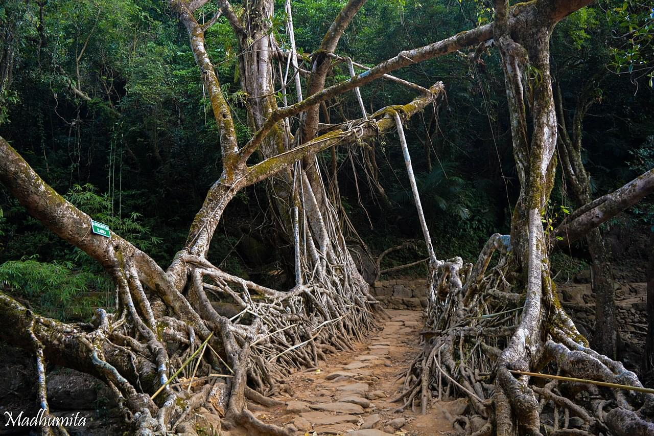 Pleasant-Meghalaya-Tour-Package-with-Asia-Cleanest-Village---Mawlynnong-JustWravel-1597390490-3.jpg