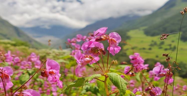 Valley-of-Flowers-Trek-JustWravel-1597385202-4.jpg