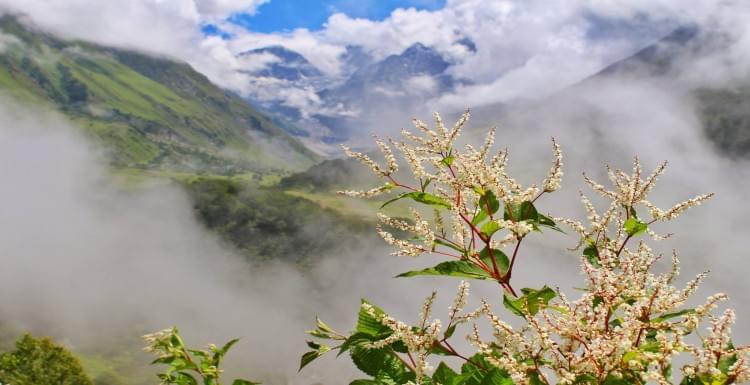 Valley-of-Flowers-Trek-JustWravel-1597385202-6.jpg