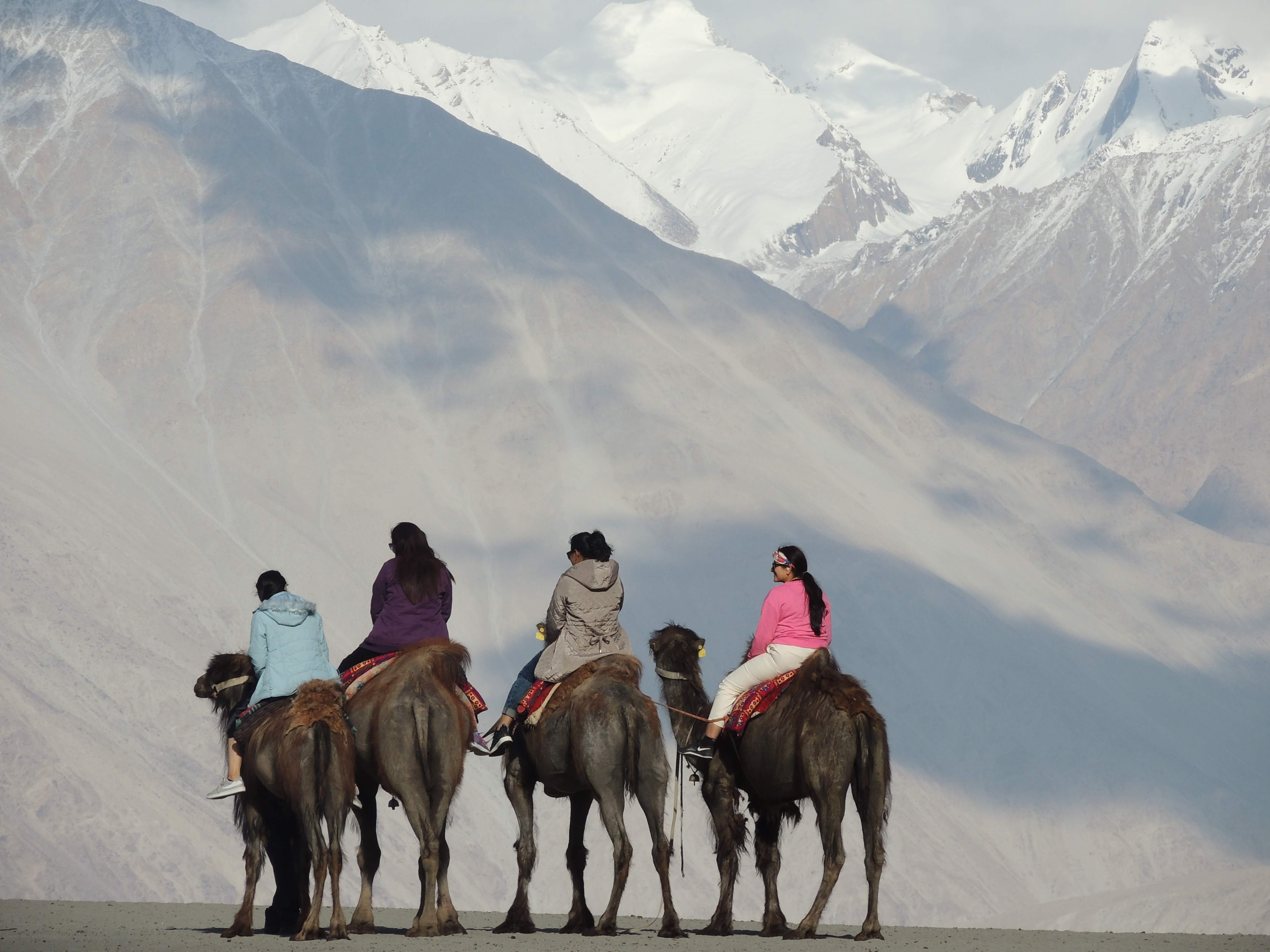 Double Hump Camel Ride at Nubra Valley