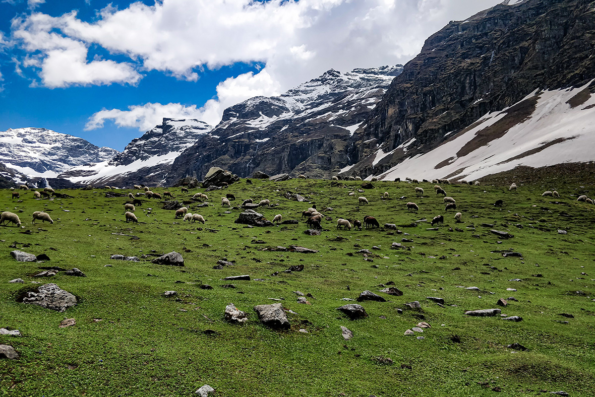 Green Meadows on the way to Dhandras Thach / Rupin Pass/Captured in June