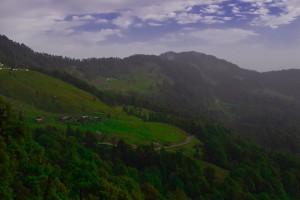 Greenery at Chopta