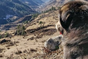 Companion on Har ki Doon Trail