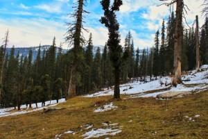 Towards Kedarkantha Summit