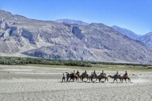 Camel Ride at Nubra Valley