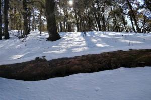 Nagtibba Trail